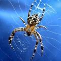 Як позбутися павуків на дачі?