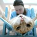 Як довго кіт відходить від наркозу?