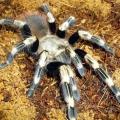 Як годувати павука в домашніх умовах?