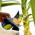 Як обрізати пальму правильно?