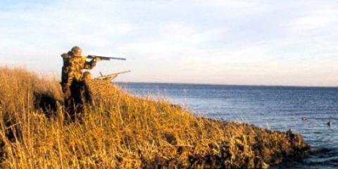 Де дізнатися нові закони про полювання?