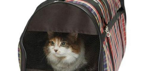 Як підготувати кішку до переїзду?