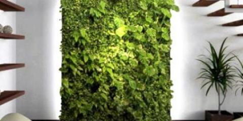 Як зробити вертикальне озеленення в квартирі?