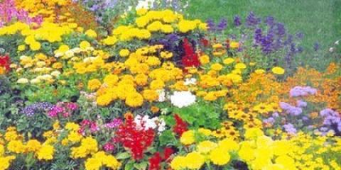 Як підібрати квіти для клумби?