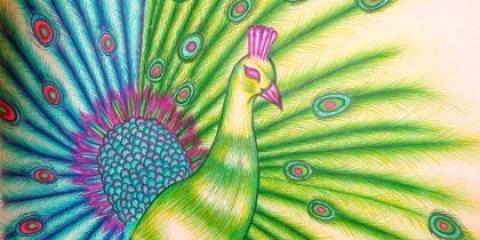 Як намалювати красивого павича: кольори