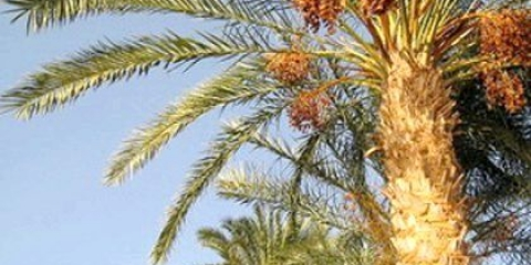 Як ростуть пальми на півдні?